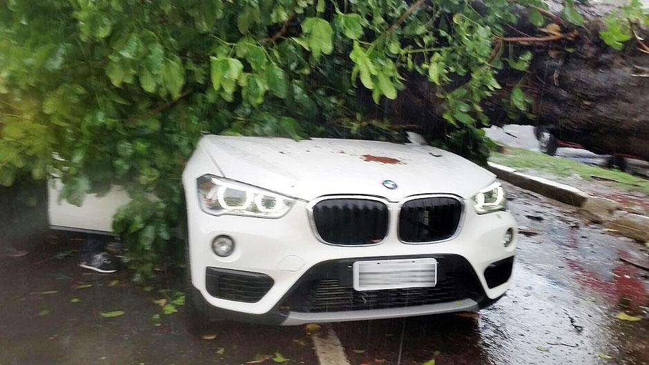 Durante temporal, árvore cai em cima de veículo no Setor Campinas, em Goiânia