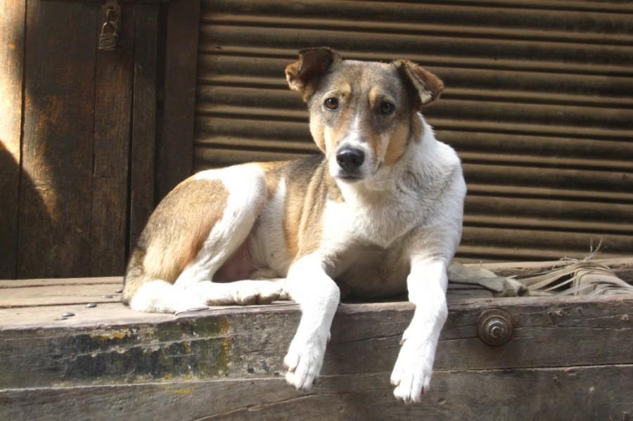 Projeto de Lei que prevê multa a quem promove maus-tratos em animais é aprovado, em Aparecida