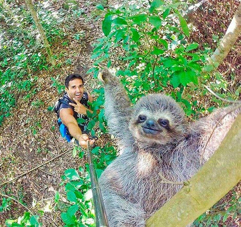 Bicho-preguiça faz sucesso na internet após 'sorrir' para selfie