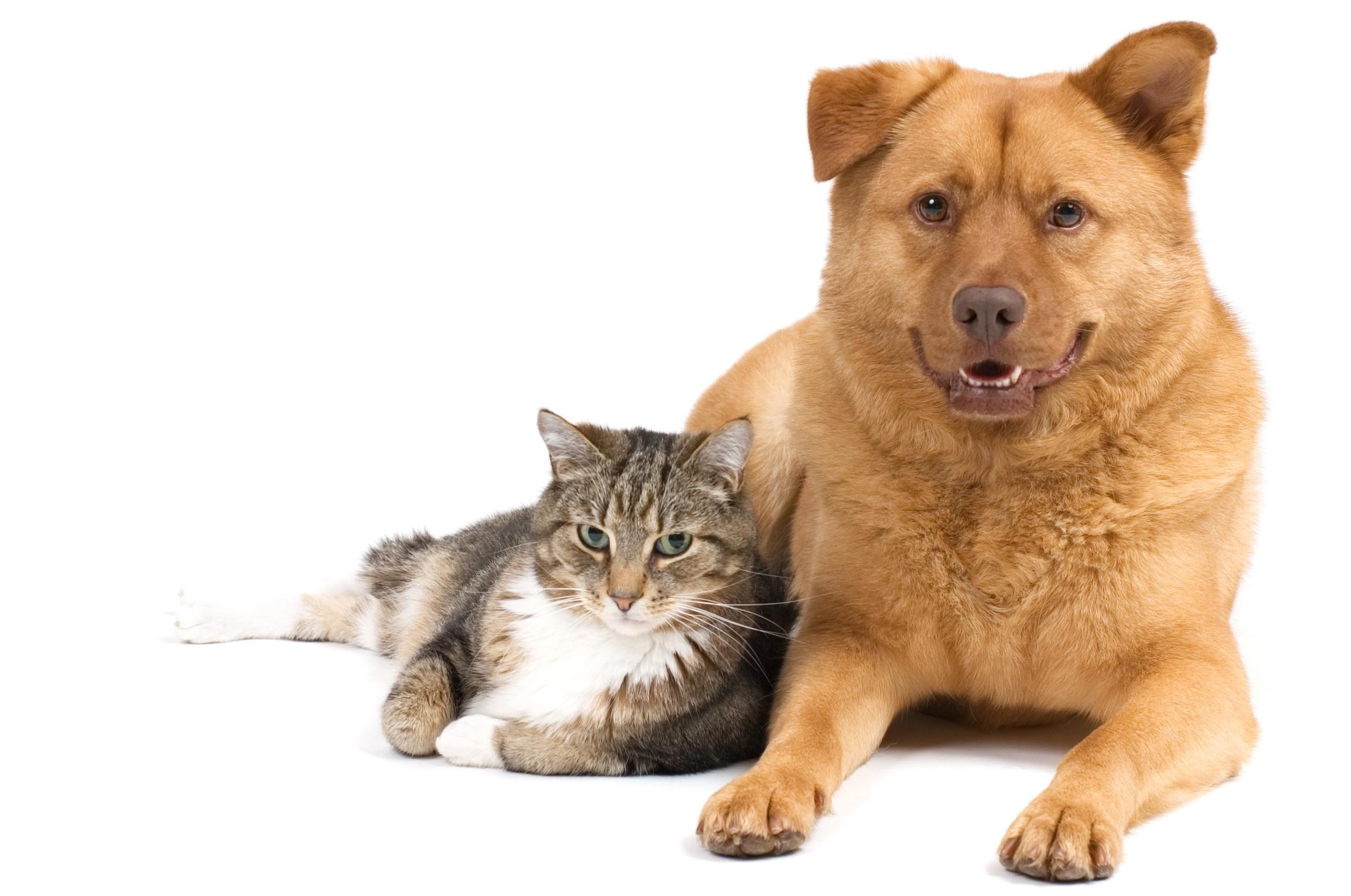 Entes públicos e ONG discutem a criação do Conselho Municipal de Bem-Estar Animal em Goiânia