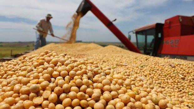 Soja faz exportações goianas recuarem 42,7%