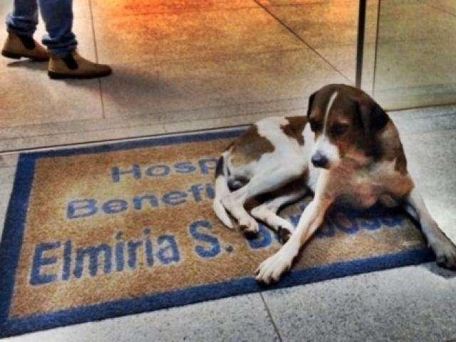 Cão dorme em porta de hospital por 8 dias à espera de dona que morreu
