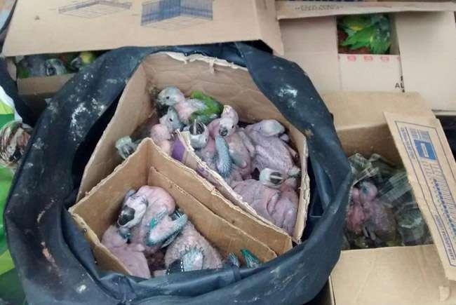 Polícia apreende cerca de 200 aves silvestres em uma casa de Aparecida de Goiânia
