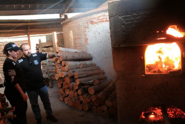 Drogas apreendidas, durante incineração feita com autorização pela Justiça de Goiás (Foto: Polícia Civil)