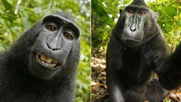 Wikimedia se nega a tirar do ar selfie feita por macaca