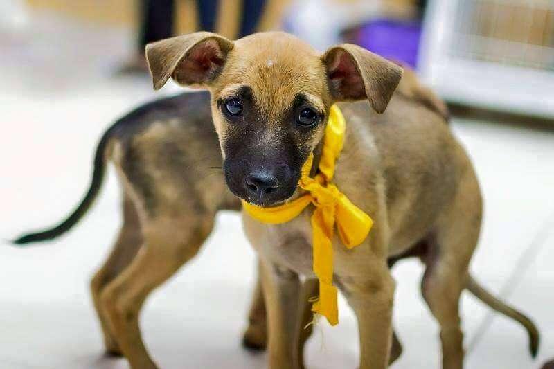 17º Pet's Day leva cães e gatos para adoção ao Passeio das Águas Shopping