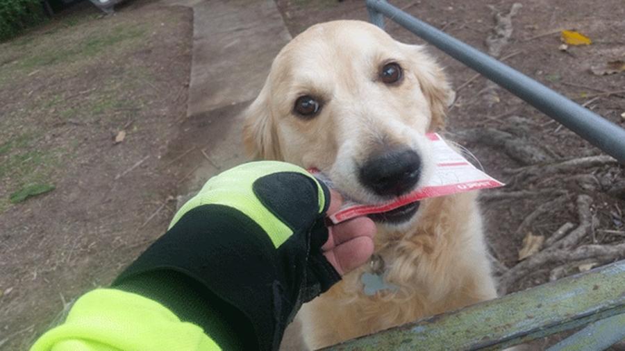 Carteiro escreve carta para cachorra que adora receber correspondências