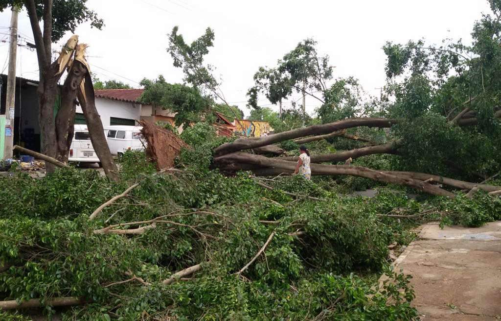 Bombeiros e Comurg retiram árvores que caíram durante a chuva na Capital