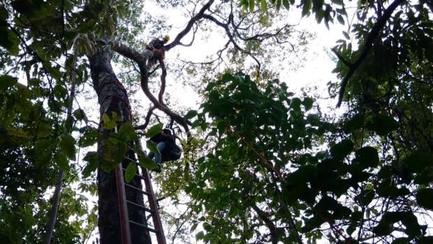 Corpo de Bombeiros resgata piloto de parapente que ficou preso em árvore, na Serra de Jaraguá
