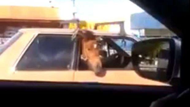 Motorista transporta cavalo em carro de passeio em Fortaleza