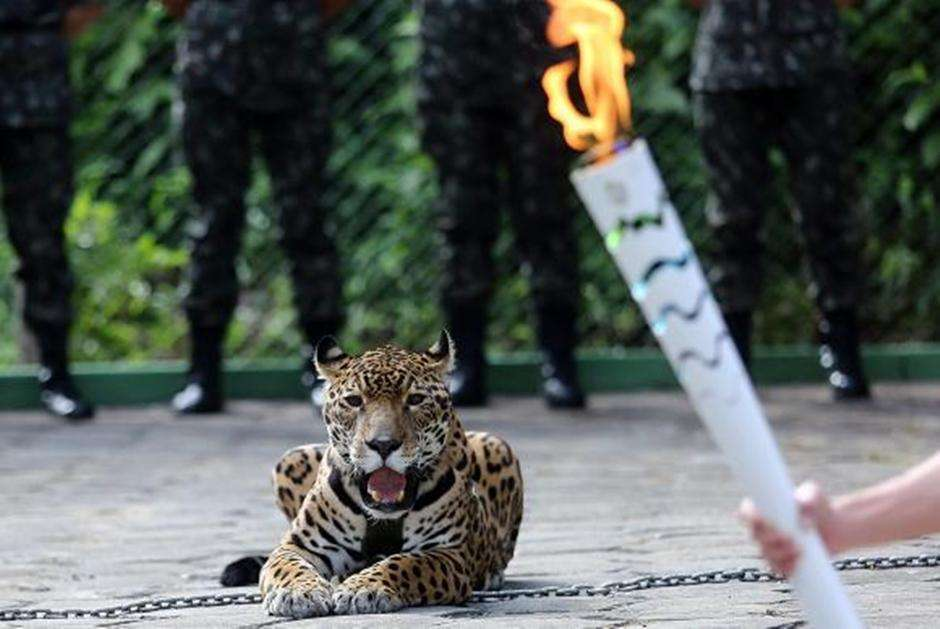 Exército é multado em R$ 40 mil por morte de onça em Manaus