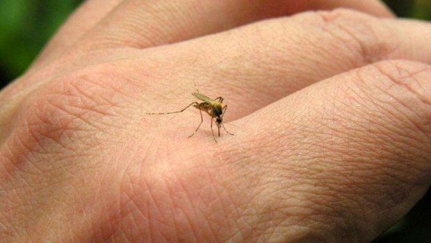 41 foram infectados por vírus Chikungunya no Brasil