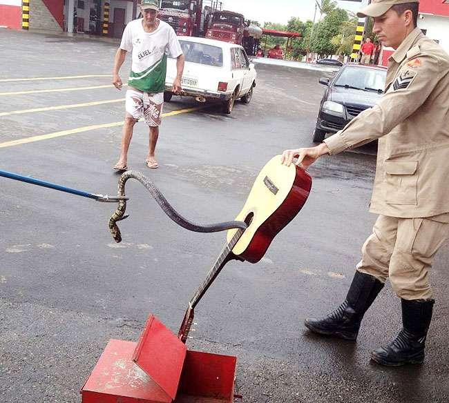 Bombeiros resgatam cobra que estava escondida dentro de violão