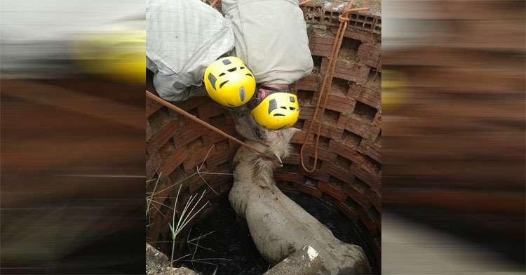 Equipes do Corpo de Bombeiros resgatam cavalo que caiu em fossa séptica
