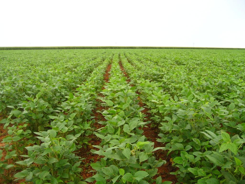 Secretaria da Fazenda fiscaliza 232 lavouras em Goiás