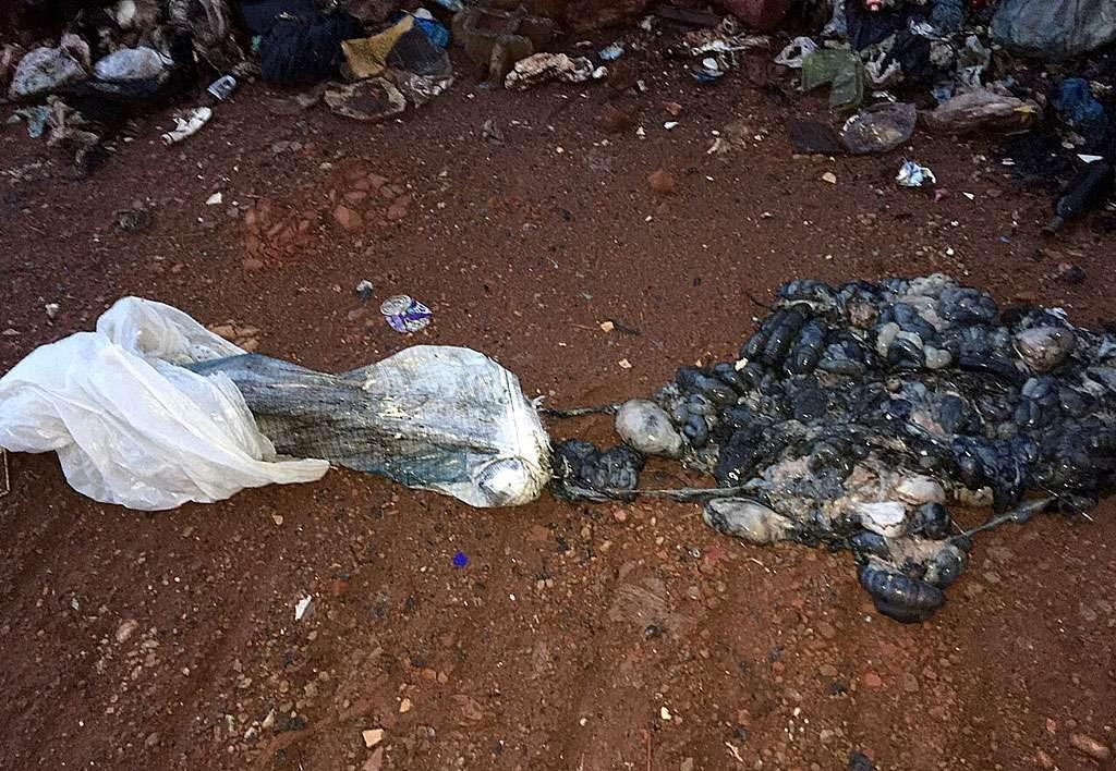 Homem abandona dois sacos na porta de clínica com restos de animais em decomposição