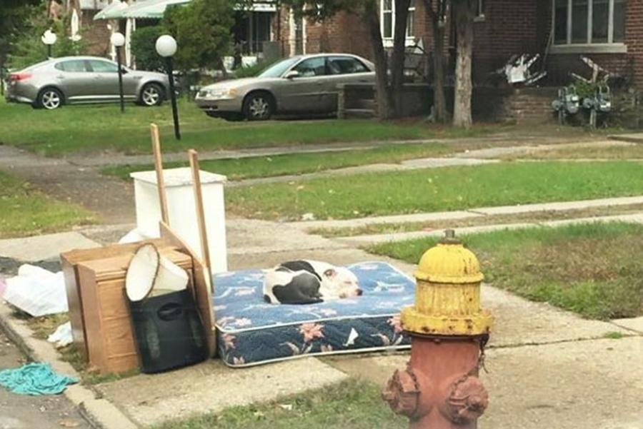 Cachorro abandonado espera volta dos donos por um mês