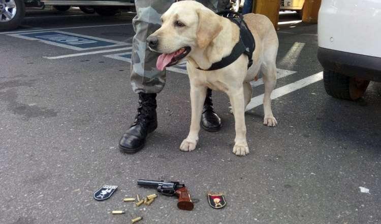 Com a ajuda de um cão farejador, policiais militares prendem homem que alugava armas