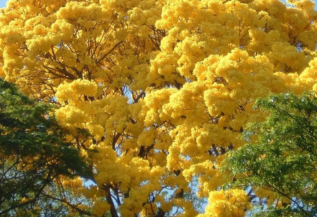 Goiânia é a segunda cidade mais arborizada do mundo
