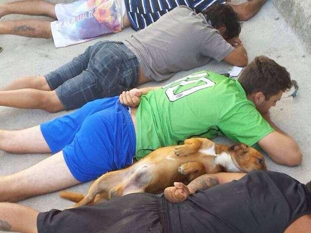 Em Santa Catarina, cão se deita ao lado de suspeitos durante abordagem policial