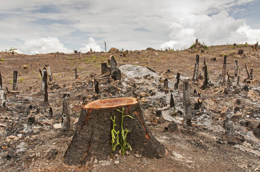 Greenpeace: efeitos das mudanças climáticas já prejudicam vida dos brasileiros
