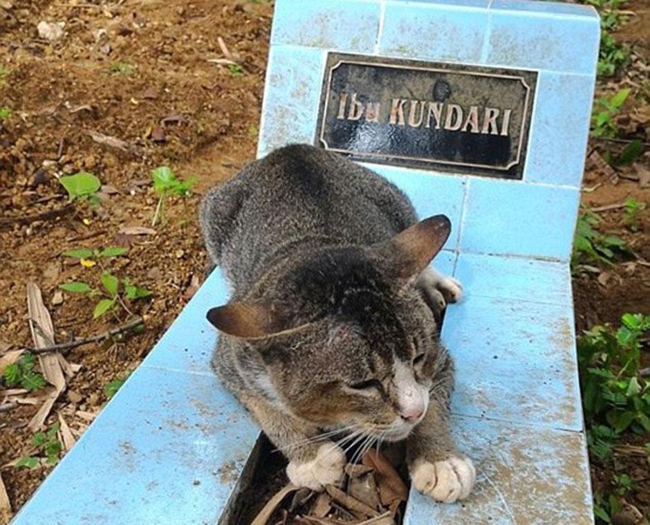 Gatinha não se afasta de túmulo de sua dona que morreu há um ano