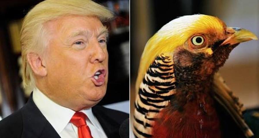 Pássaro 'sósia' de Trump faz sucesso em zoo na China