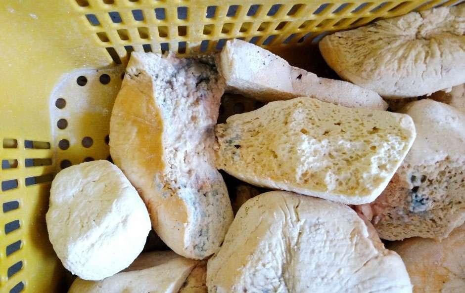 Agrodefesa apreende 500 kg de queijo clandestino em Goiânia