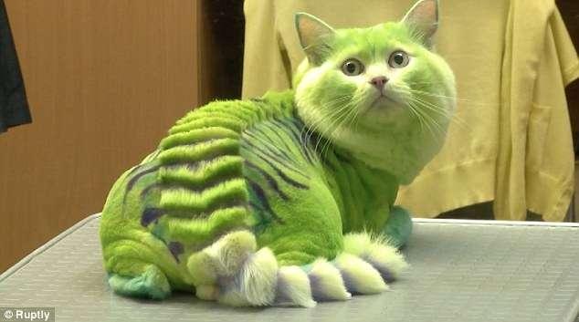 Nova tendência na Rússia é pintar os animais de estimação
