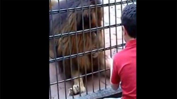 Inquérito apura responsabilidade em caso de menino atacado e mutilado por tigre