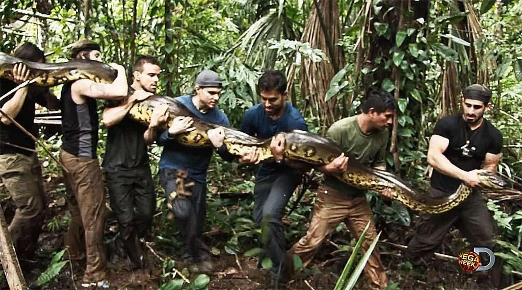 Programa pode mostrar homem sendo comido por cobra gigante
