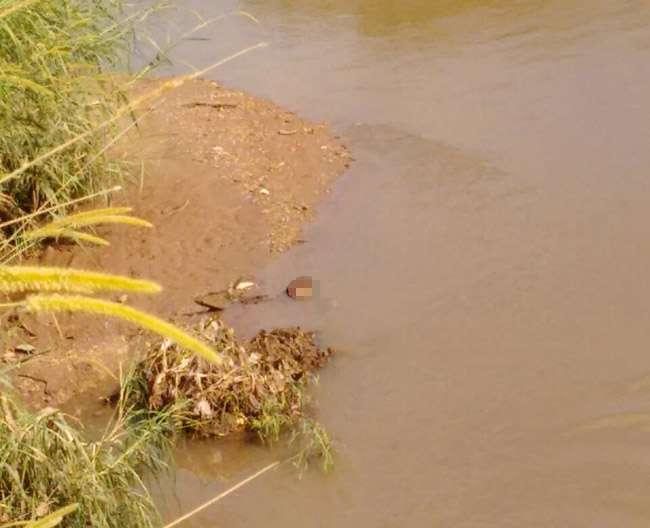 Cabeça em decomposição é encontrada nas margens do Córrego Anicuns