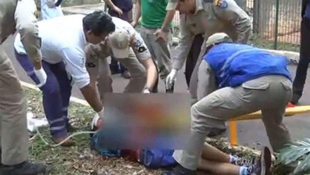 Menino tem braço dilacerado por tigre em zoológico no Paraná