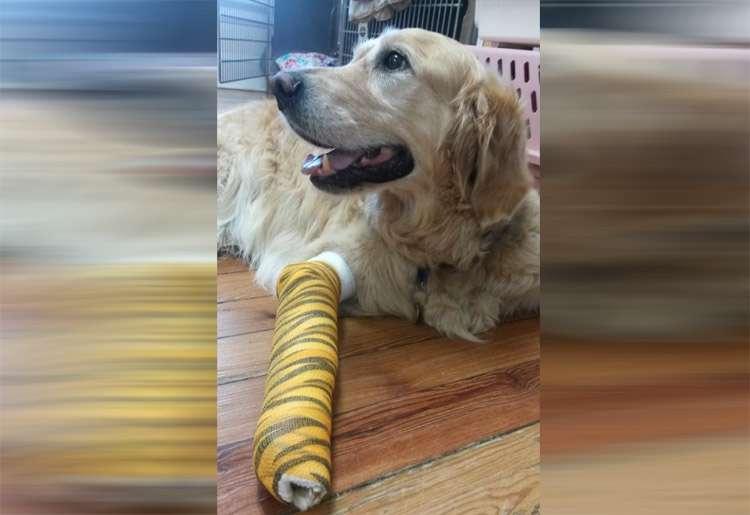Nos EUA, cão se atira em frente a ônibus para salvar a dona cega