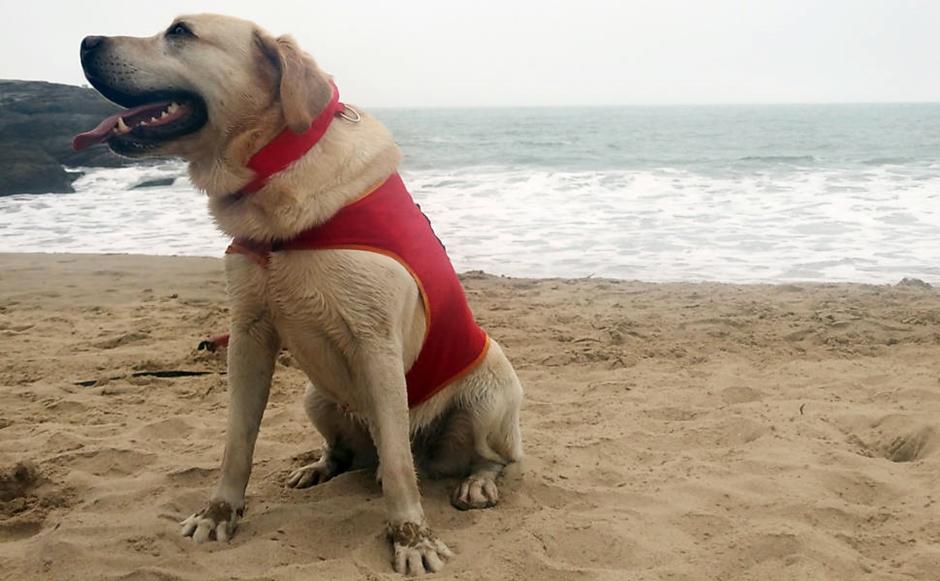 Primeiro cão salva-vidas do Brasil começa a atuar em Santa Catarina