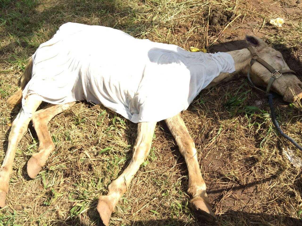 Estudantes de Veterinária resgatam cavalo em situação de maus tratos em Goiânia