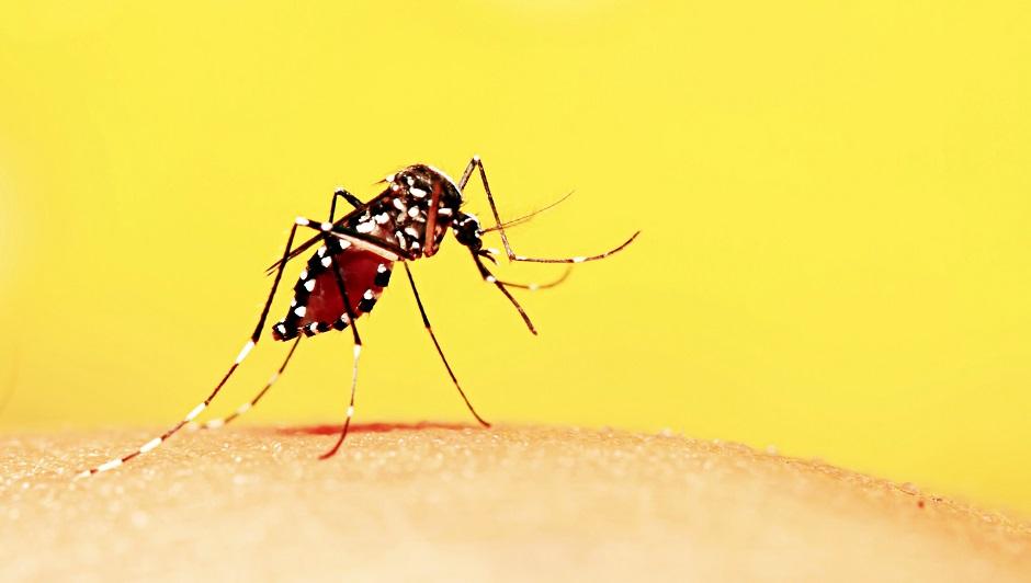 Pesquisa conclui que vírus Zika pode ser transmitido pelo sangue