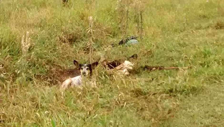 Cão fica ao lado de dono encontrado morto na cidade paulista de Assis