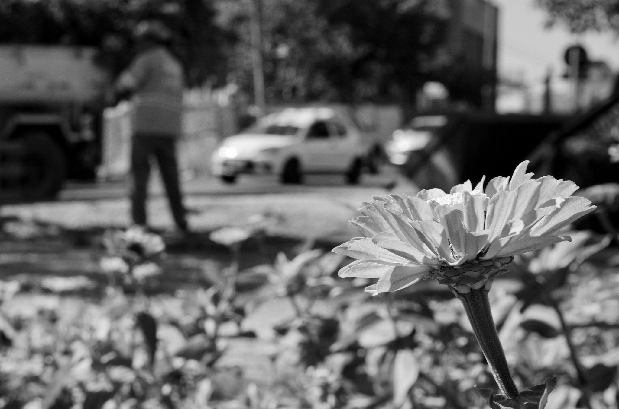 Servidores da Comurg lançam livro com fotografias do cotidiano de Goiânia