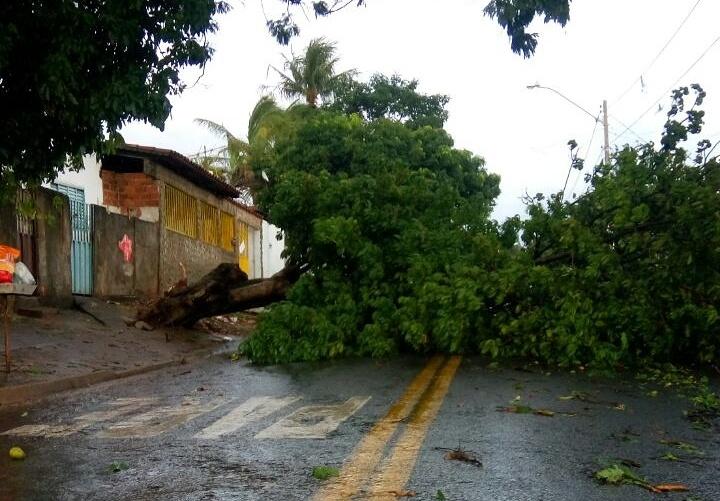 Forte chuva provoca queda de árvores em diversos bairros de Goiânia