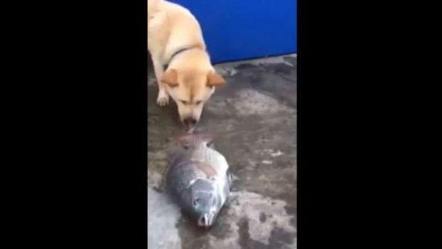 Cachorro joga água para que peixes não morram no chão