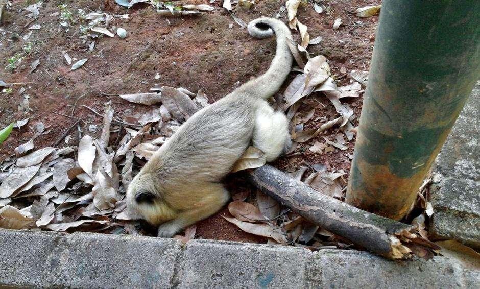 Macaco é encontrado morto próximo ao zoológico