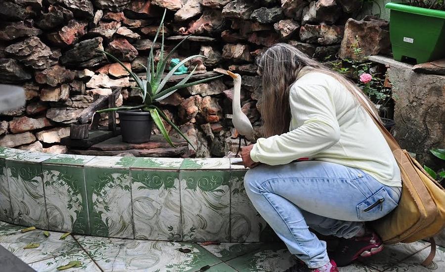 Número de casas com focos de Aedes aegypti aumenta em Goiânia