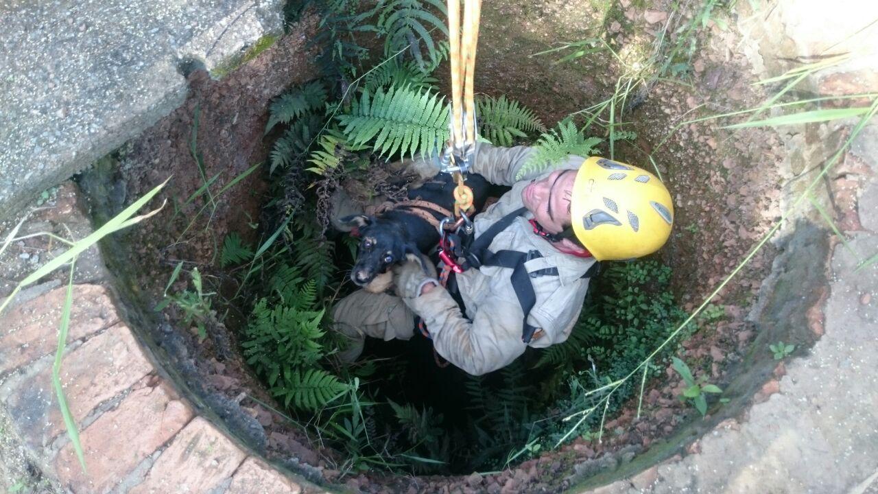 Corpo de Bombeiros resgata cachorro em cisterna, em Goiânia