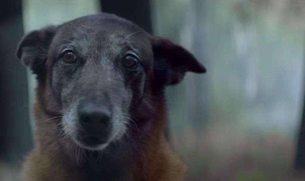 Campanha sobre abandono de animais emociona internautas