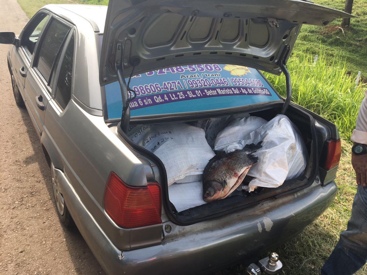 PRF apreende 400 quilos de pescado transportado de maneira irregular, próximo a Goianápolis
