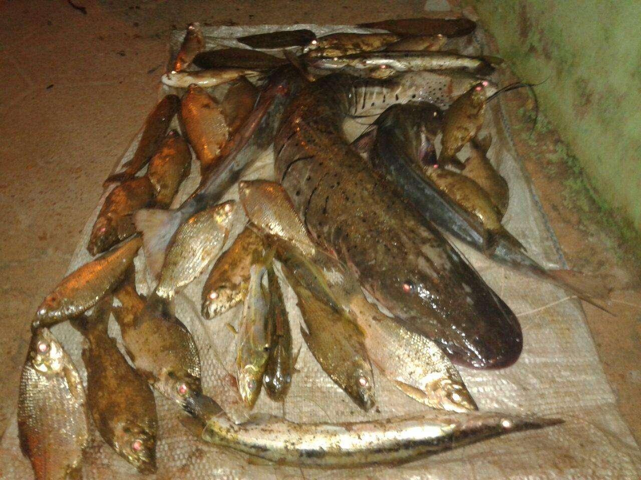 Polícia apreende 15 kg de pescado irregulares em Montes Claros