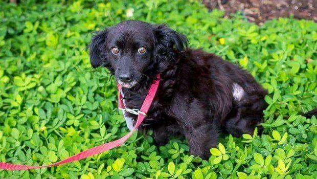 26º Pet's Day leva 30 animais para adoção ao Passeio das Águas Shopping