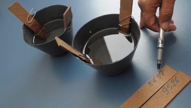 Armadilhas para coletar ovos do mosquito Aedes aegypti são utilizadas em Goiânia