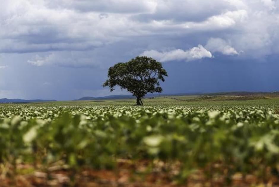Cerrado pode ter extinção recorde